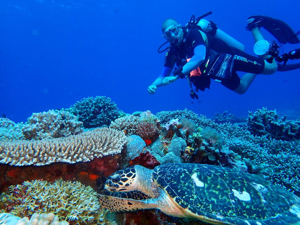 Apo Reef Marine Park Dugong Dive Center